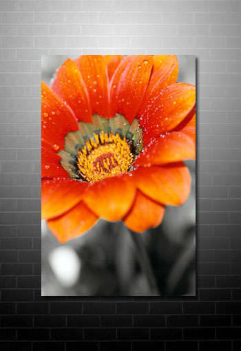floral fine art prints, flower canvas art, canvas floral print