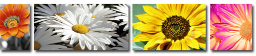 floral art, floral canvas art prints, floral wall art, flowers on canvas, floral canvas painting