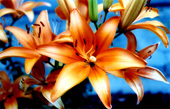 lillies canvas art, floral art pictures, art print floral, floral on canvas, modern art flower, framed flower art