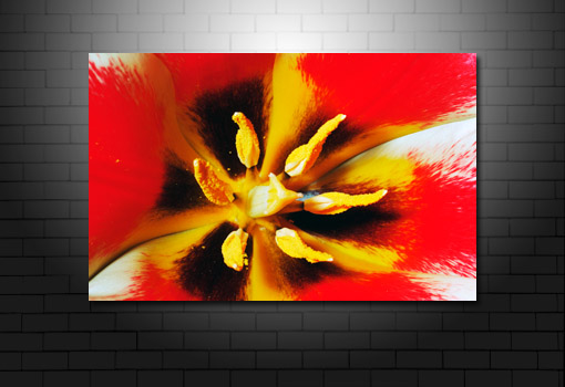 art print floral, abstract art flower, digital art floral