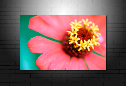 floral art pictures, art print floral, floral on canvas, modern art flower