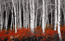 red forest canvas art, red forest wall art