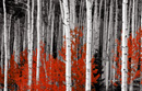 forest canvas print, red landscape art
