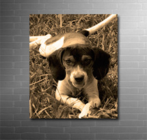 photo on canvas sepia finish, my photo to canvas art