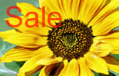 sunflower canvas art, flower art photos, digital art floral, floral art work