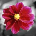 flower art, art print floral, original floral art, flower canvas art, digital art floral
