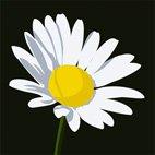 daisy canvas print, flower canvas print, flower canvas, art flower wall, floral art print, digital flower art