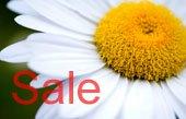 daisy wall art, flower art photos, digital art floral, flower canvas, floral art work