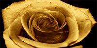floral art pictures, art print floral, floral on canvas, modern art flower, framed flower art