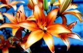 lillies canvas art, floral art pictures, art print floral, floral on canvas, modern art flower, framed flower art