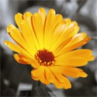 original floral art, floral art pictures, flower art photos, abstract art flower, art print floral