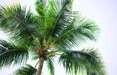 palm tree canvas print, original floral art, floral art pictures, flower art photos, abstract art flower, art print floral