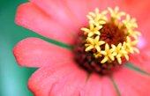 roses canvas wall art, canvas floral print, flower wall art, art nouveau flower, art flower abstract, flower pop art