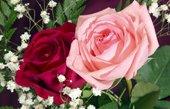 roses canvas art, art print floral, original floral art, flower canvas art, digital art floral