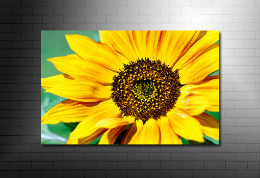 Sunflower Canvas Print, fine art floral print, floral original art, floral art print