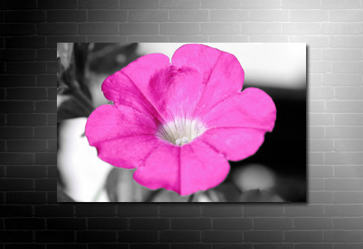 flower wall art, flower abstract art, floral on canvas, flower canvas